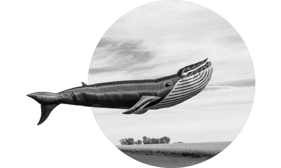 start_up_whale_bw